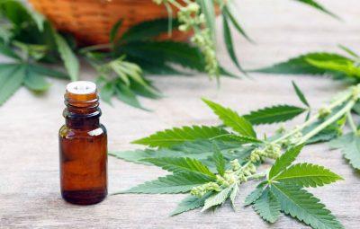 Cannabis el oro verde de la medicina