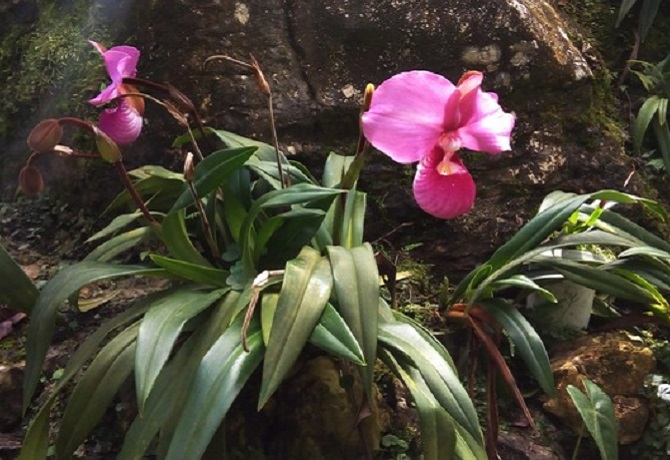 SERFOR aprueba Plan Nacional de Conservación de las Orquídeas en el Perú