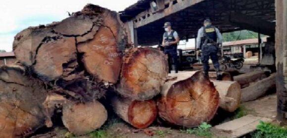 Fiscalia de San Martín incauto  2500 pies tablares de madera ilega