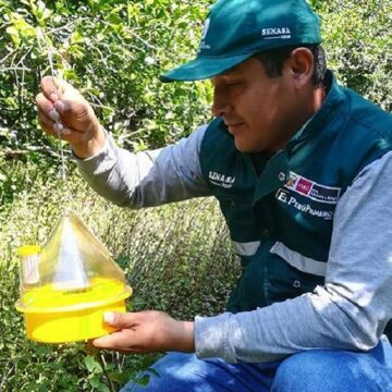 "SENASA beneficiara a mas de 4000 agricultores son beneficiados por el ""Proyecto para Erradicar la Mosca de Fruta"""