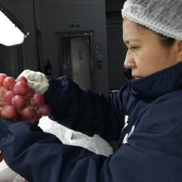 MIDAGRI  concreta acuerdo para la exportación de uva de mesa al mercado de Argentina