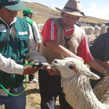 MIDAGRI entrega 9000 kits veterinarios en siete provincias de la región para proteger ganado