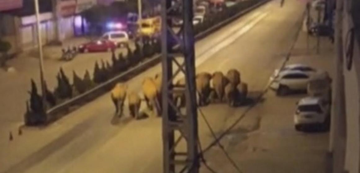Quince elefantes migran hacia el norte de China atravesando varios pueblos