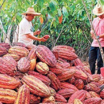 Ministro Tenorio: Cacao fino nacional conquista mercados de Europa y EE.UU.
