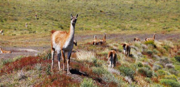 Conforman primer comité de control y vigilancia contra casa furtiva Vicuñas en frontera Perú-Bolivia