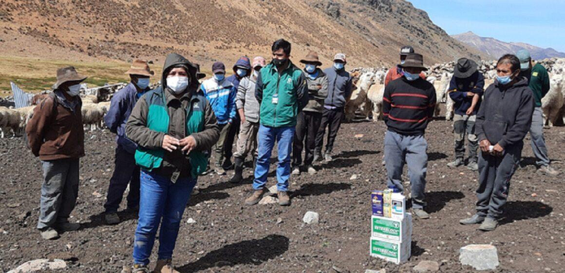 Dirección Regional de Agricultura brindo asistencia técnica en prevención y control de parásitos para camélidos sudamericanos