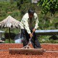 MIDAGRI protege 2 millones de hectáreas de cultivos con Seguro Agrícola